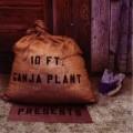 Purchase 10 Ft. Ganja Plant MP3