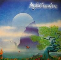 Aphelandra