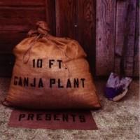 10 Ft. Ganja Plant