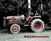 Shampouing