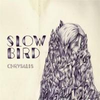 Slow Bird