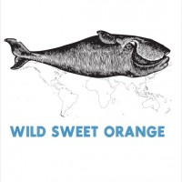 Wild Sweet Orange