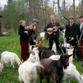 Purchase Lucas Stark & Bruksorkestern MP3
