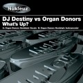 Purchase Organ Donors MP3