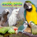 Purchase Exotic Birds MP3