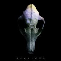 Hawthonn